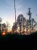 Západ slunce v lese
