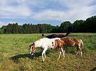 Nad stádem koní
