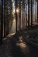 Ráno v klidu, ráno v lese...