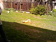 Roxy relaxuje
