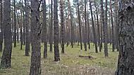 prechádzka v lese