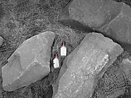 do_tr_vy_mezi_kameny