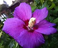 Mravenci na květu