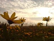 kvetinky1
