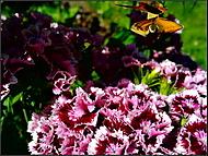..motýl při odletu...