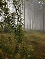 Větev  v makru