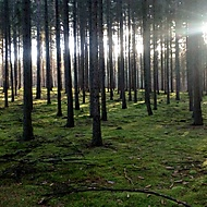 Lesní pohoda