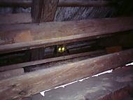satan kočka