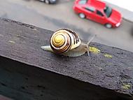 Pásovka na balkoně