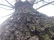 Strom na podzim