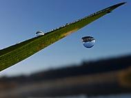 Kapka rosy v letu