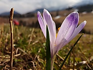 IMG_20170323_133500 (pavuk40) - Honor 7 Lite