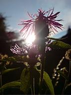 Západ slunce přes kytku