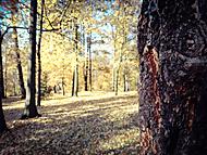 Podzim v H. Brodu