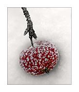 zimní sklizeň