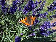 Motýl ve vůni