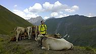 Pasáček krav