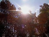 slunce mezi stromy:)