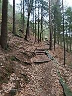 les pod Valdštejnem