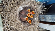 Ptačí nenažranci :D