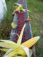 Plody podzimu