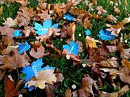 Podzim u Samsungu (SchuckeM) – Nokia N8