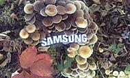 Podzim se Samsungem