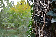 Old Samsung On An Old Tree (MrGaMeR) - Samsung