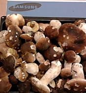 Podzim,ráj houbařů