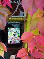 Podzimní okno (Rindi) – Samsung