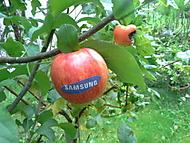 Letos se Samsung vyvedl,konkurence nic moc.. :-)